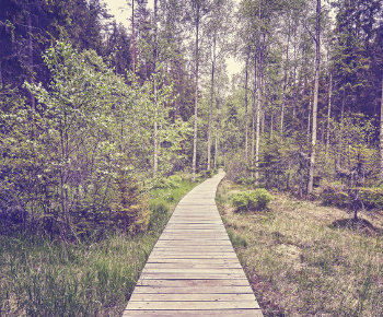 chemin-foret-illustration-export-comptable-simple